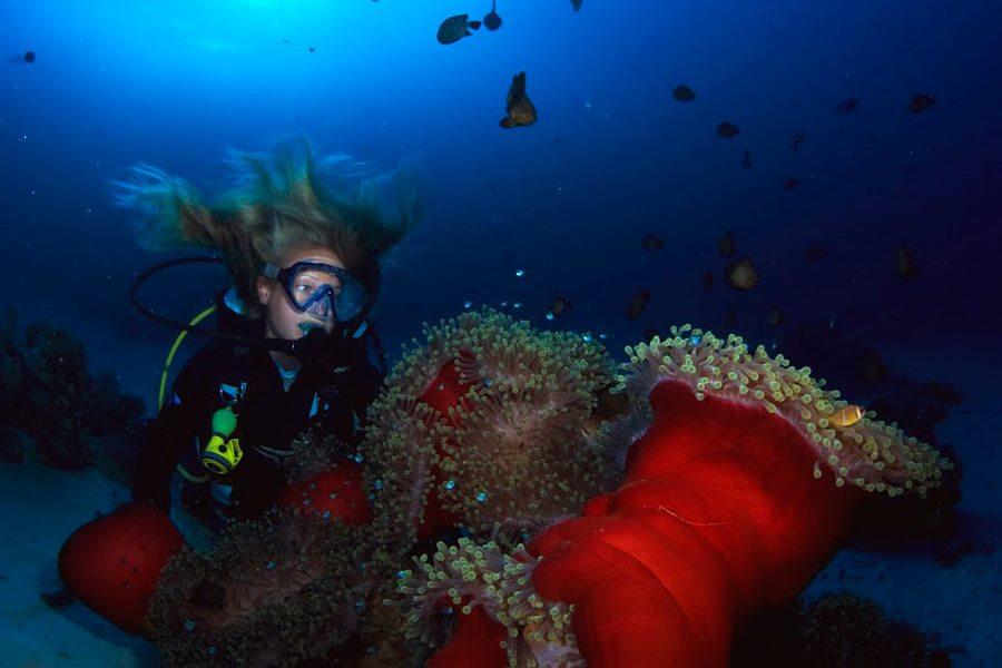 Ducks Diving Superior Marsa Alam Tauchbasis ägypten Wedive